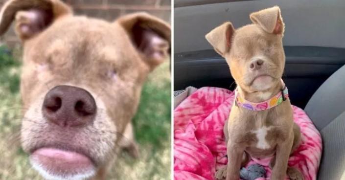 Cachorro que Perdeu os Olhos por Negligência de Seus Antigos Donos, Encontrou um lar e se Tornou uma Celebridade no Instagram