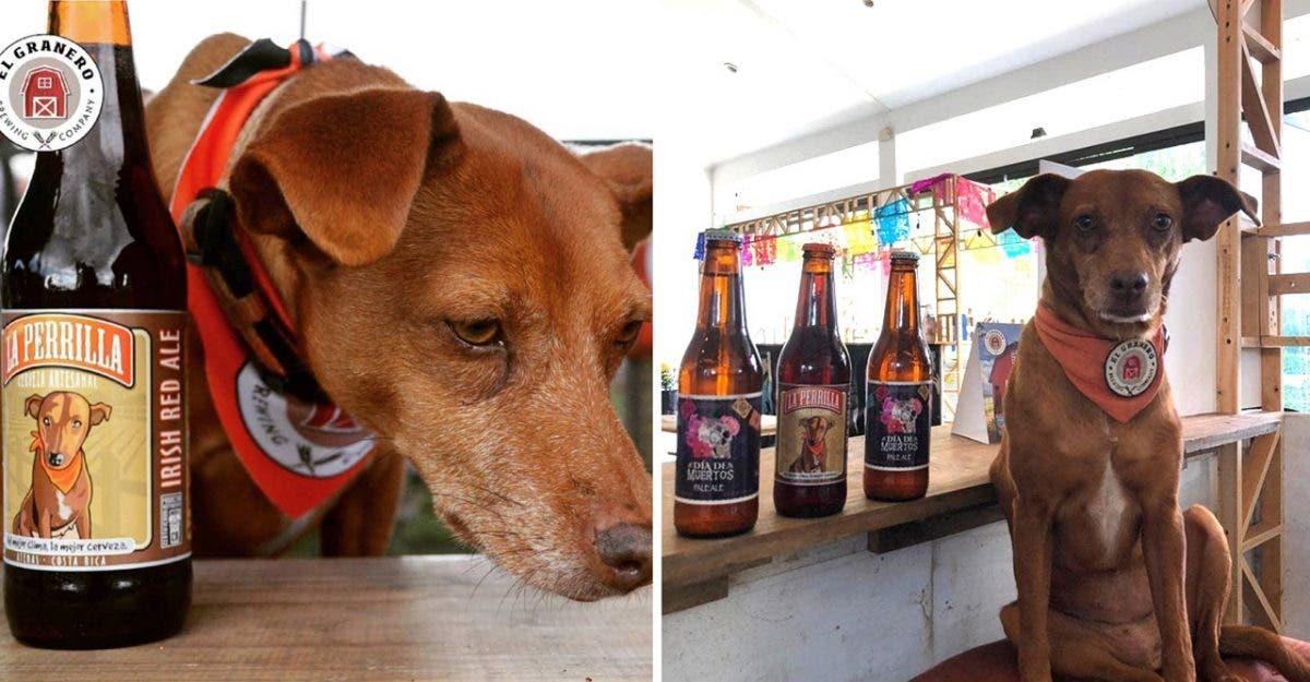 Cerveja artesanal coloca cães abandonados na sua marca e doa lucro para ajudá-los