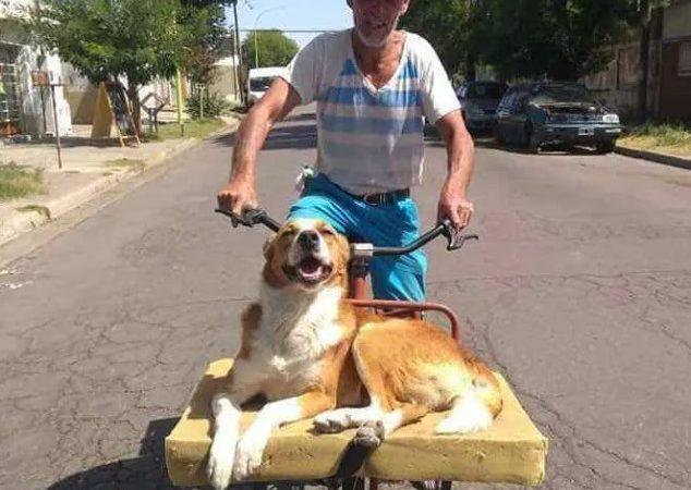 Ele adora passear de bicicleta com seu dono. Ele tem até uma caminha para desfrutar o vento no rosto