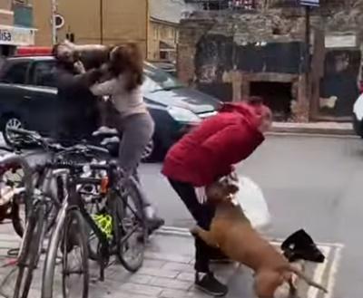 Cachorro tem reação bizarra ao ver sua dona sendo assaltada, mas consegue salvá-la de criminoso