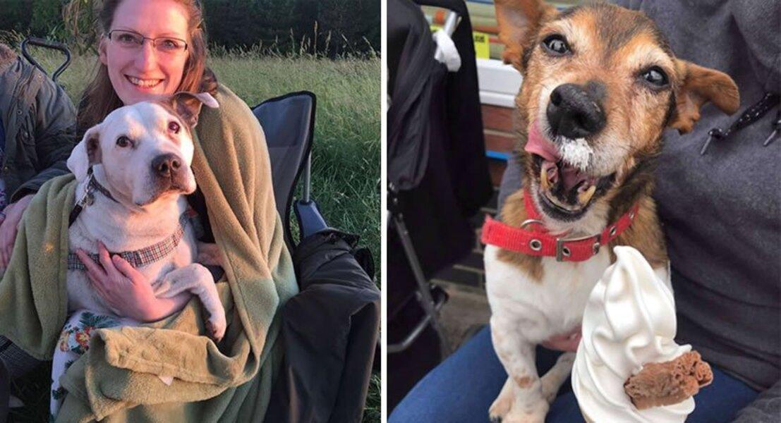 Mulher cria santuário para cães e oferece-lhes amor e cuidado em seus últimos dias