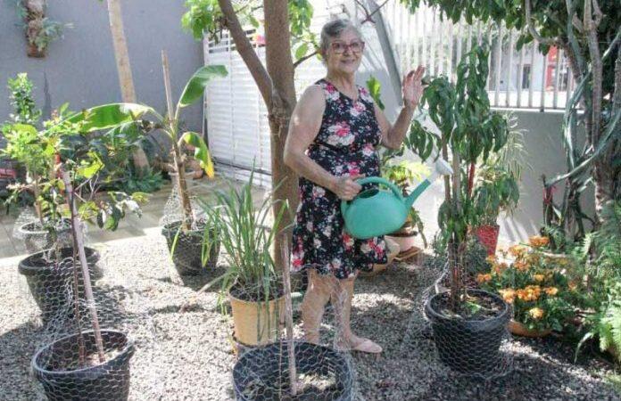Idosa planta árvores frutíferas para vizinhos colherem à vontade